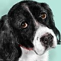 Lois Ivancin Tavaf - The Springer Spaniel