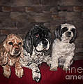 Janice Rae Pariza - Three Dog Night