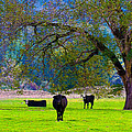 Michele  Avanti - Three Oregon Cows