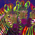 Jane Schnetlage - Three Rainbow Zebras
