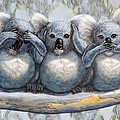 David Clode - Three Wise Koalas see no...