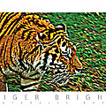 David Davies - Tiger Bright  Naturally...