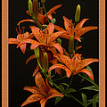 Geraldine Scull ART - Tiger Lilies With Black...