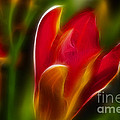 Gary Gingrich Galleries - Tiger Lily 6074-Fractal