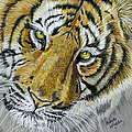 Michelle Wrighton - Tiger