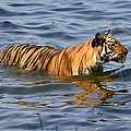 Fotosas Photography - Tigress of the Lake