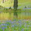 Photography Moments - Sandi - Tipsoo Lake - Mount...