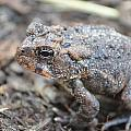 Jeff at JSJ Photography - Toad Eye