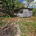 David Litschel - Tobacco Farm Shack in...