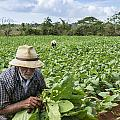 David Litschel - Tobacco Farmer Vinales...