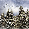 Reflective Moments  Photography and Digital Art Images - Touch of Winter - Merry...