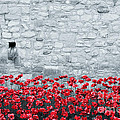 Pete Edmunds - Tower Poppies 01B