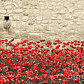 Pete Edmunds - Tower Poppies 02A