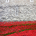 Pete Edmunds - Tower Poppies 03