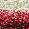 Pete Edmunds - Tower Poppies 04A
