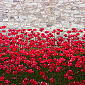 Pete Edmunds - Tower Poppies 04B