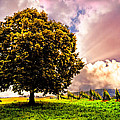 Debra and Dave Vanderlaan - Tree in the Vineyard