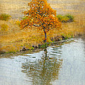 Irina Hays - Tree reflection on...