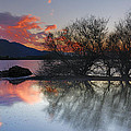 Guido Montanes Castillo - Trees in the water at...