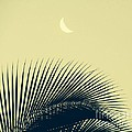 Fred  Sheridan - Tropic Moon