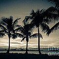 Rene Triay Photography - Tropical Breeze Delight