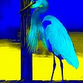 Barbara Chichester - Tropical Great Blue on...