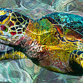 Jack Zulli - Tropical Sea Turtle