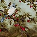 Rick Bainbridge - Tufted Titmouse