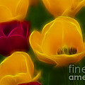 Gary Gingrich Galleries - Tulips-6758-Fractal