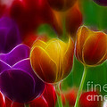 Gary Gingrich Galleries - Tulips-7060-Fractal