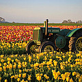 Steve McKinzie - Tulips and Tractors