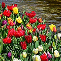 Kaye Menner - Tulips by the Water