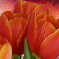 Lynn Bolt - Tulips with a Textured...