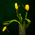 Alexander Senin - Tulips - Yellow on Green