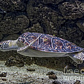 Tessa Fairey - Sea Turtle Houston Zoo...