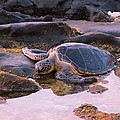 Chris Lindner - Turtle Sunset2