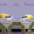 Janette Boyd - Two Goldfinches at...
