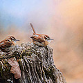 Jai Johnson - Two Little Wrens