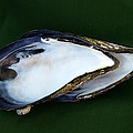 Jolly Van der Velden - Two Blue Mussel Shells