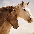 Jerry Cowart - Two Wild Horses On...