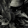 Cynthia Dickinson - Untitled Tintype Garden