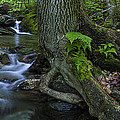 Andy Gimino - Vermont landscape brook...