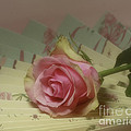 Inspired Nature Photography By Shelley Myke - Victorian Rose