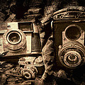 Shannon Story - Vintage Cameras