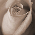 Jennie Marie Schell - Vintage Taupe Rose Bud...