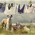 Trudi Simmonds - Wash Day