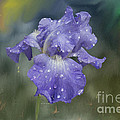 Angela A Stanton - Water Drops on Blue...