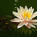 MTBobbins Photography - Water Lily and Pad