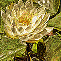 Geraldine Scull ART - Water Lily Painting
