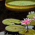 Byron Varvarigos - Waterlilies And Platters...